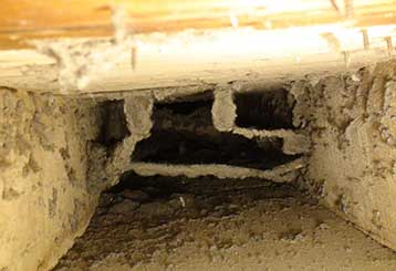 Signs of Pests or Mold in Your Air Ducts | Air Duct Cleaning Simi Valley, CA